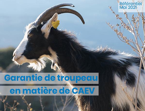 visuel_guide-CAEV