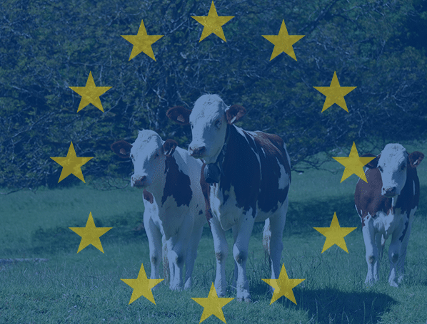 europe ruminants